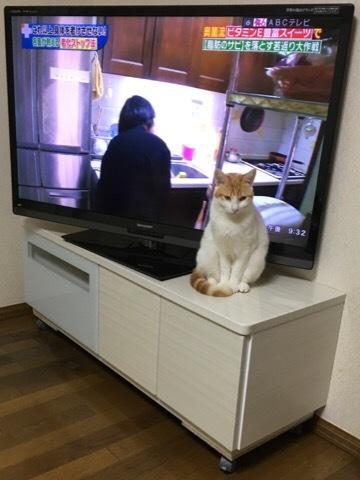もーちゃんとテレビ