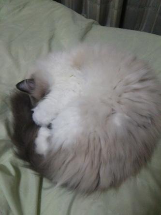 猫20170116-1