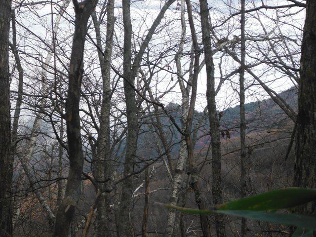 岩原古城(さるが城) (46)