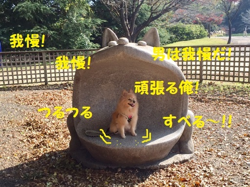 IMG_6377_1.jpg