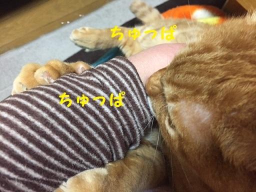 IMG_6771_2.jpg