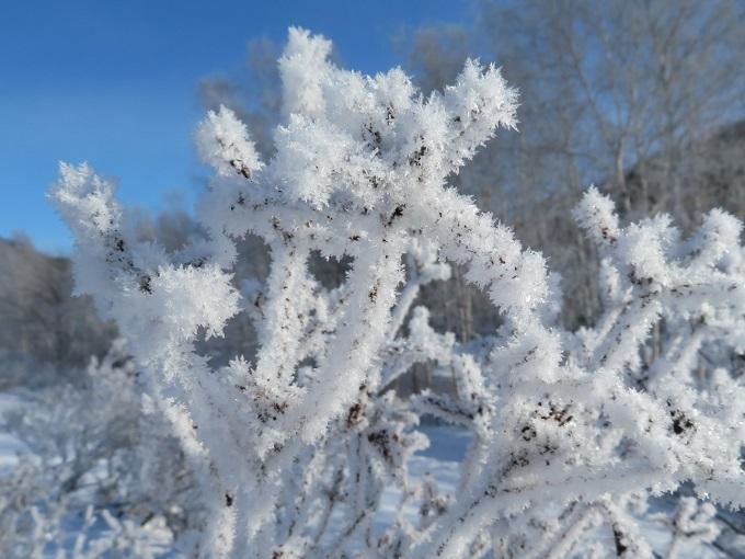 霧氷 (2)