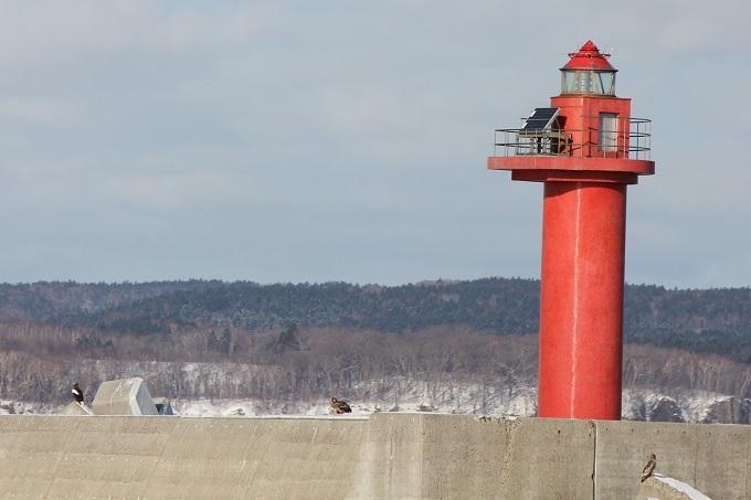 オジロ&オオワシ&赤灯台 (3)