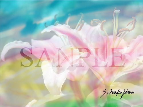 flower002b.jpg