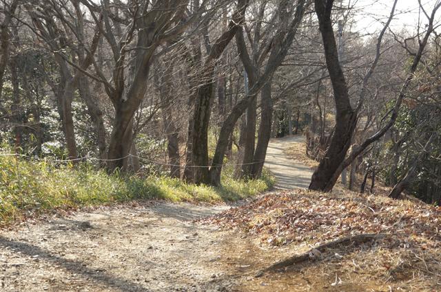 平山城址公園の尾根道