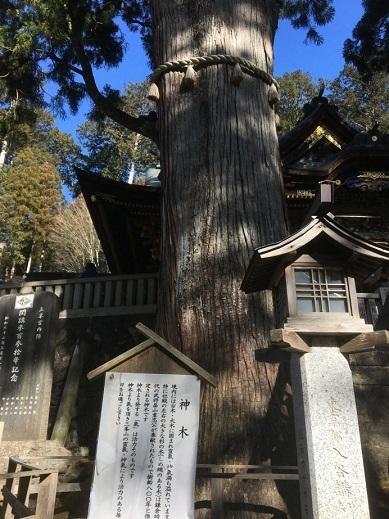 三峰神社ご神木