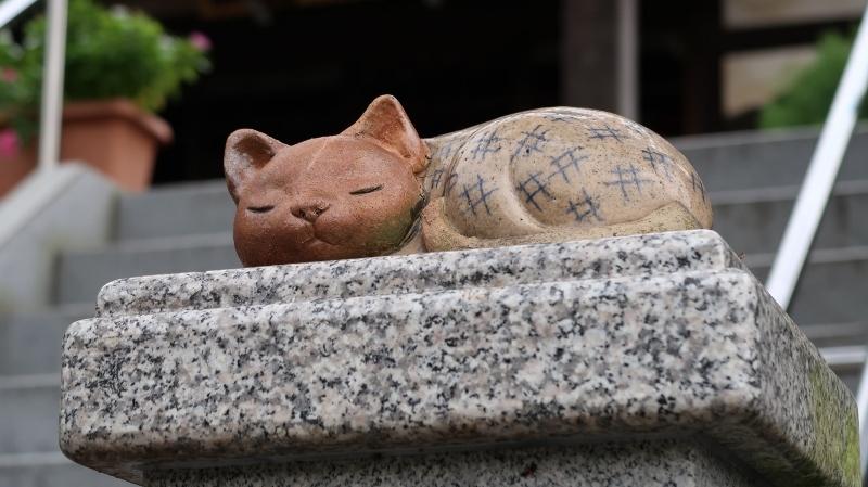 04癒し猫(廣慶寺) (800x449)