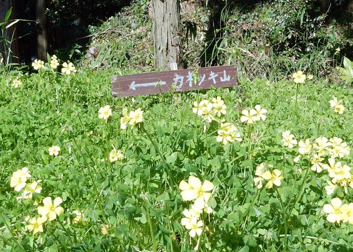 2017,1,28飯盛山-15
