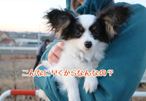 NlghrzadfsSsJyL1483624513_1483624566.jpg