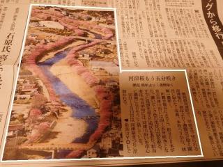 0208kawazusakurak1.jpg