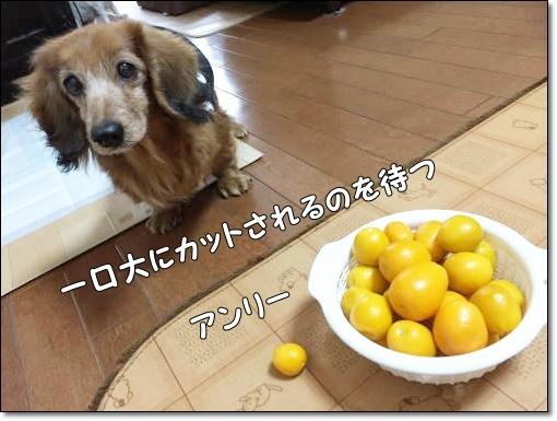 IMG_8539.jpg