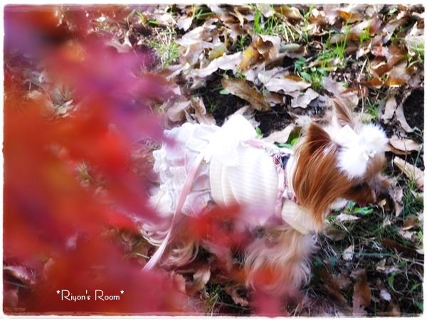 紅葉とリヨン②