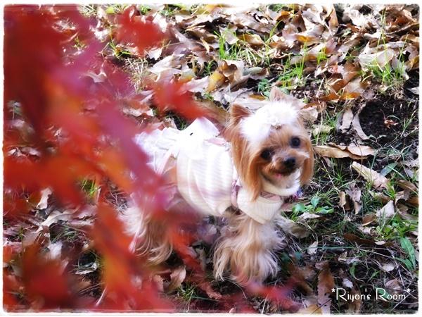 紅葉とリヨン③