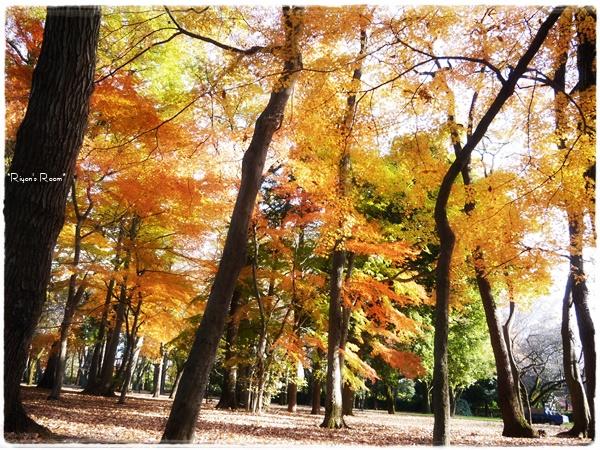大きな公園①