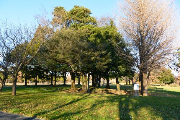 水元公園④