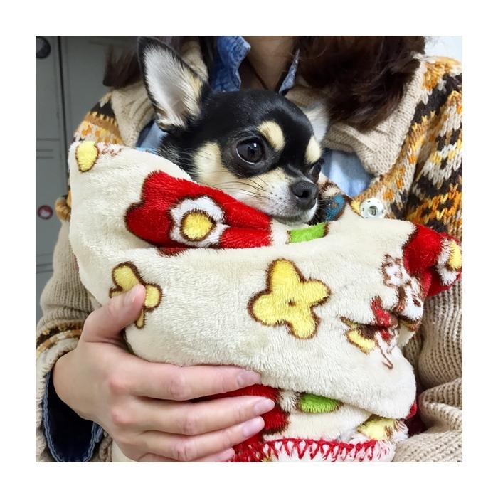 2017-01-05 ちまき ブログ用