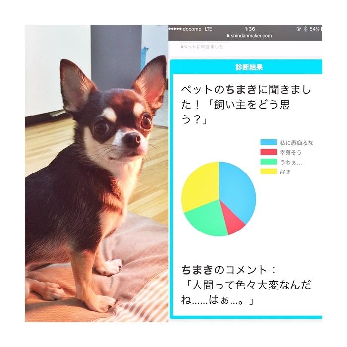 2017-01-20 ちまき ブログ用