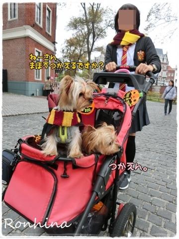 ココちゃんの入学式⑥