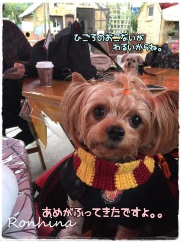 ココちゃんの入学式⑫