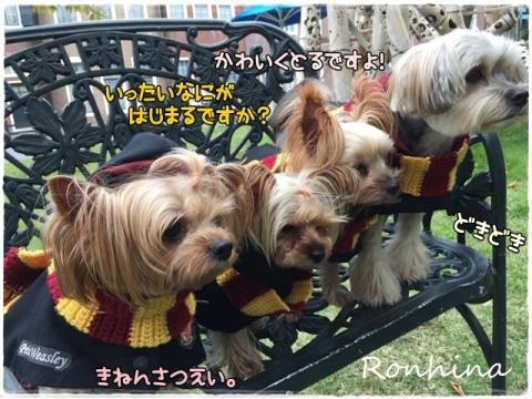 ココちゃんの入学式⑰