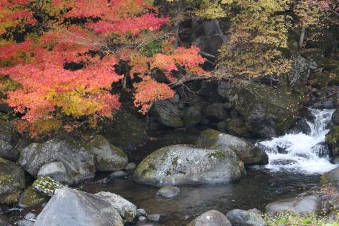牛道川の紅葉