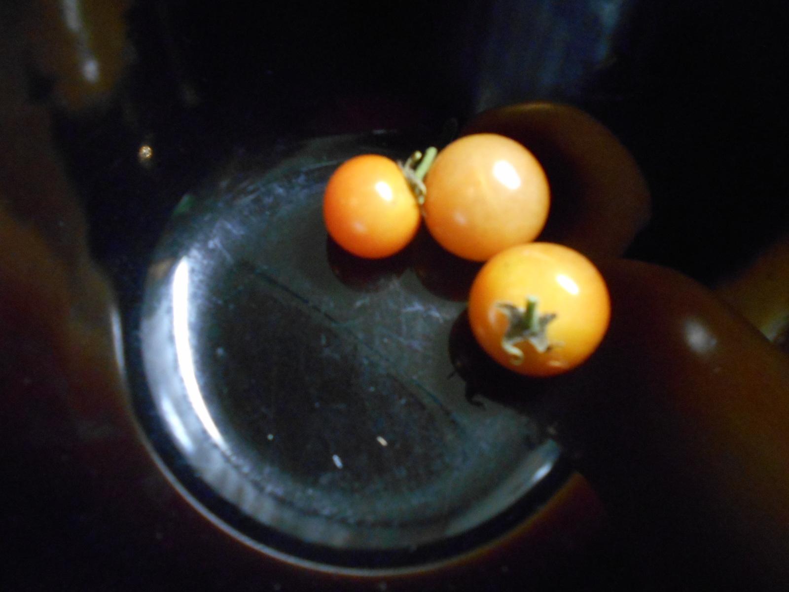 ミニトマト2016