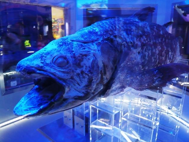 沼津港深海水族館:シーラカンス1