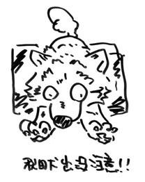 マメ赤虎72