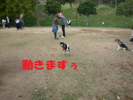 blog11295.jpg