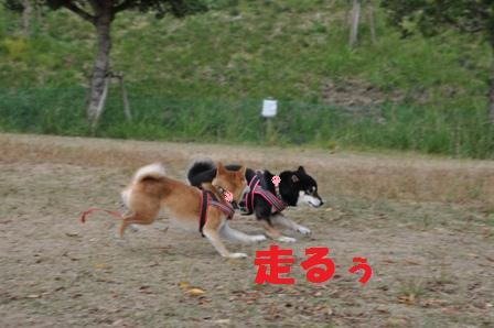 blog11307.jpg