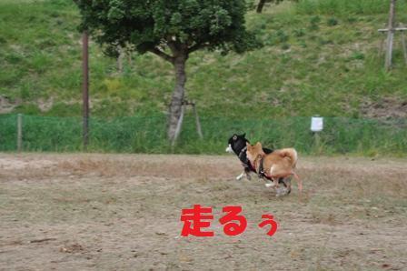 blog11308.jpg
