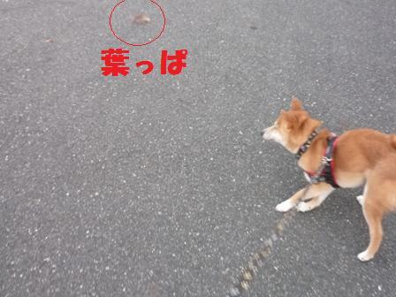 blog11326.jpg