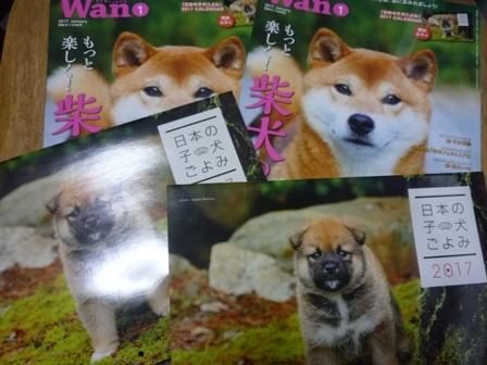 blog11328.jpg