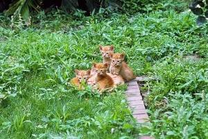 June Cats