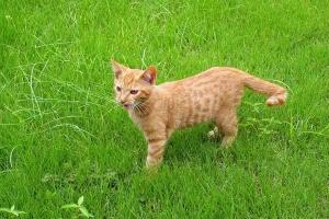 August Cat