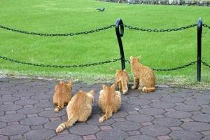 October Cats