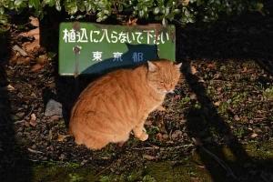 January Cat(s) Tokyo