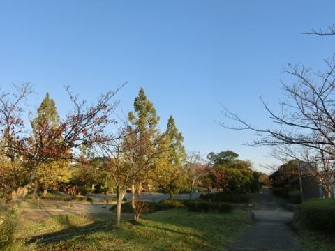 散歩で 005 (480x360)