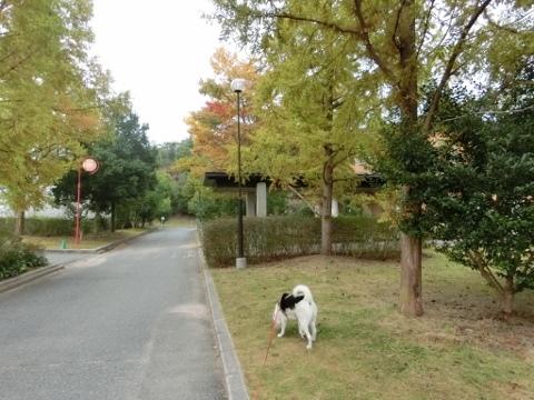 さんぽ 018 (480x360)