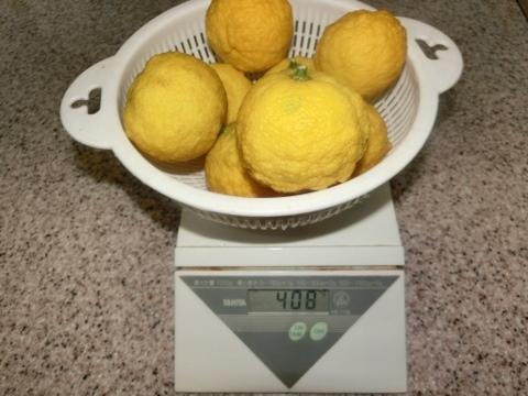 柚子 001 (480x360)