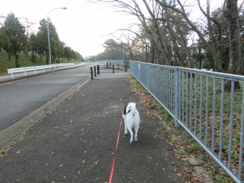 散歩 002 (480x360)