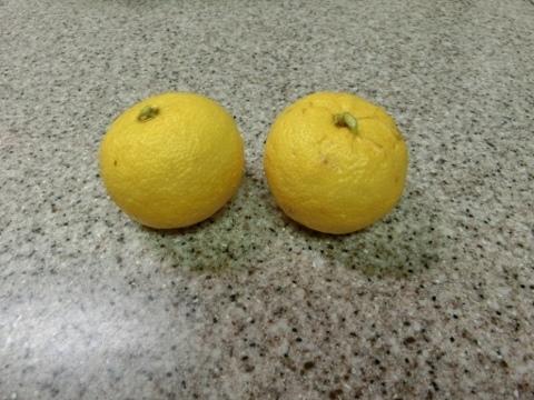 柚子 003 (480x360)