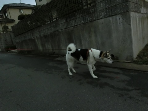 散歩 001 (480x360)