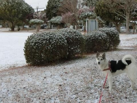 雪 006 (480x360)