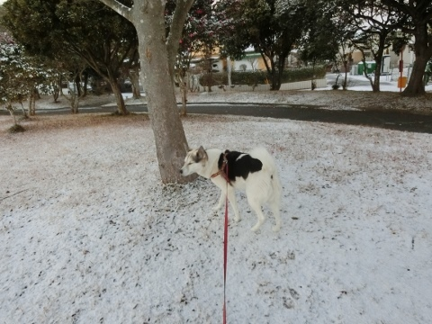 雪 008 (480x360)