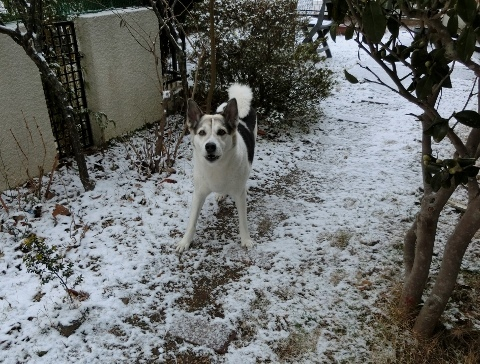 雪 015 (480x364)