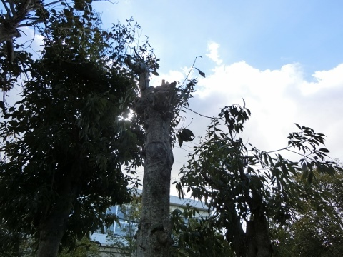 植木 022 (480x360)