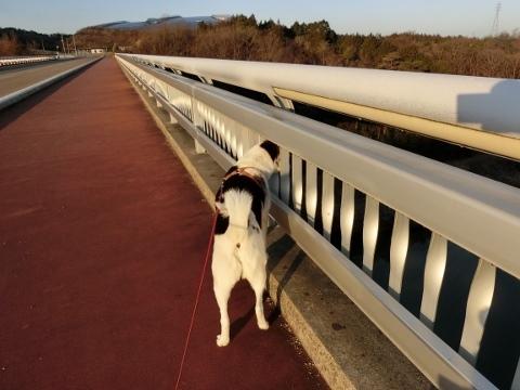 散歩 040 (480x360)