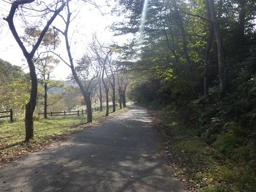 調子ヶ滝39