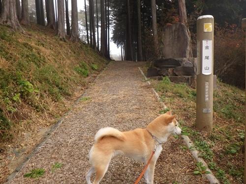 金尾山つつじ公園4